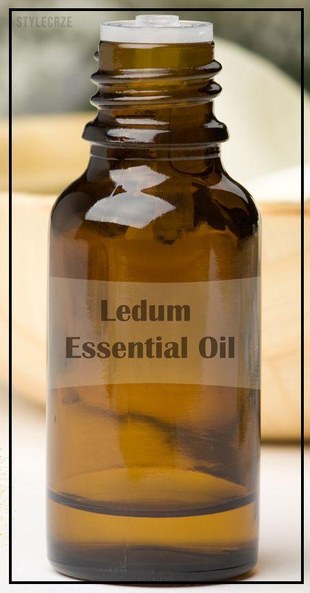 10 Amazing gesundheitliche Vorteile von ledum ätherischem Öl