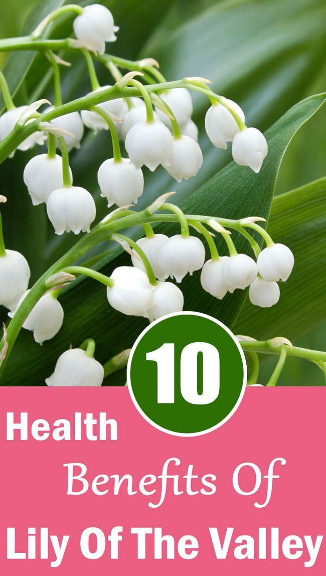 10 Amazing gesundheitlichen Vorteile von Maiglöckchen