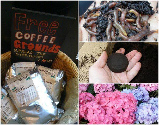 10 Genius Wege alten Kaffeesatz in Ihrem Garten zu verwenden,