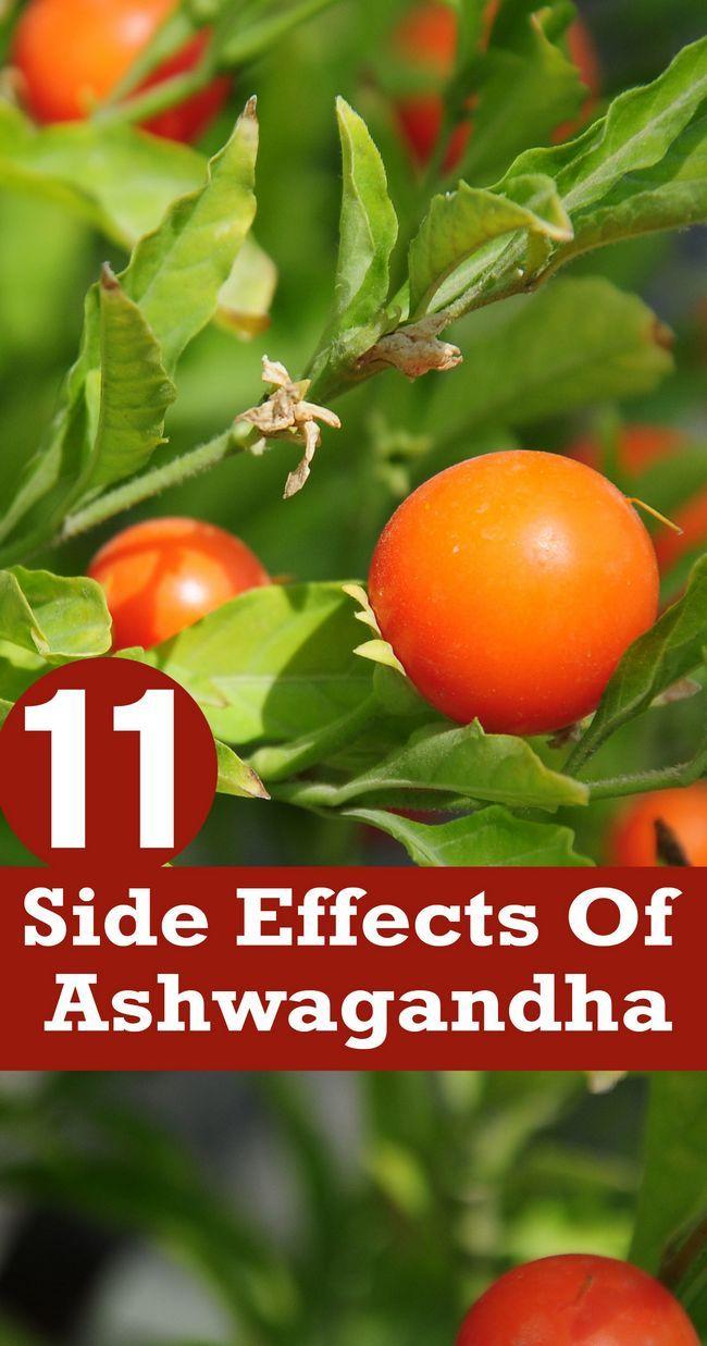 11 Unerwartete Nebeneffekte von ashwagandha
