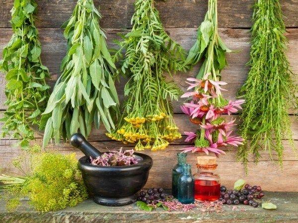 12 Heilkräuter müssen Sie in Ihrem medizinischen Garten wachsen