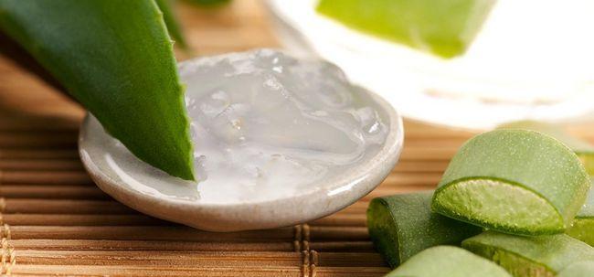 12 Nebenwirkungen von Aloe Vera Saft sollte man sich bewusst sein,
