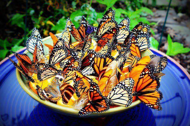 14 Schöne DIY Schmetterling Zubringer Ihren Garten ein Schmetterling Paradies zu machen