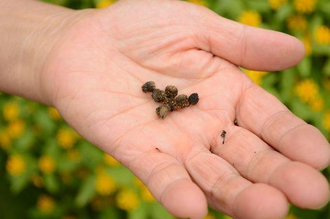 15 Erweiterte Samen ab Geheimnisse, die Sie nicht im Gartencenter lernen