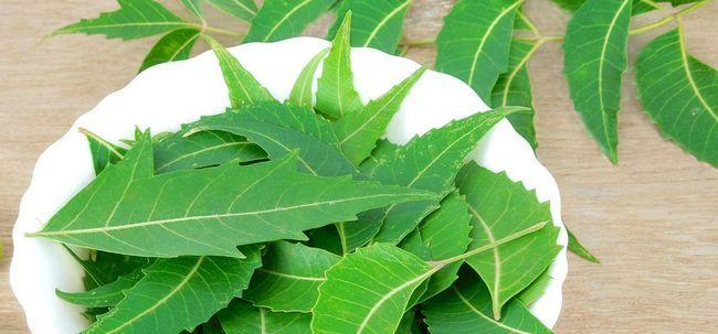 18 Erstaunliche Vorteile von Neem Blätter für Haut, Haare und Gesundheit