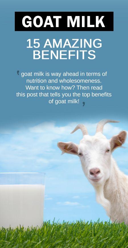 18 Erstaunliche gesundheitliche Vorteile von Ziegenmilch