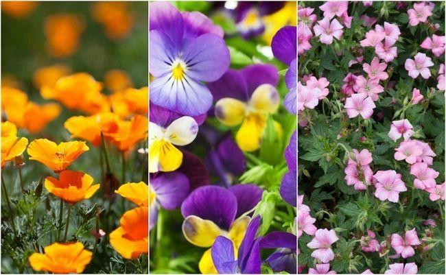 18 Einfachste und schönsten Blumen jeder kann in ihrem Garten wachsen