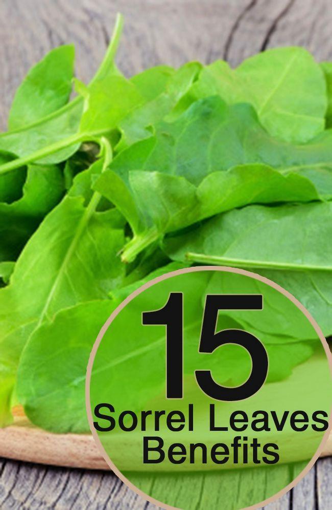 19 Erstaunliche gesundheitliche Vorteile von Sauerampfer