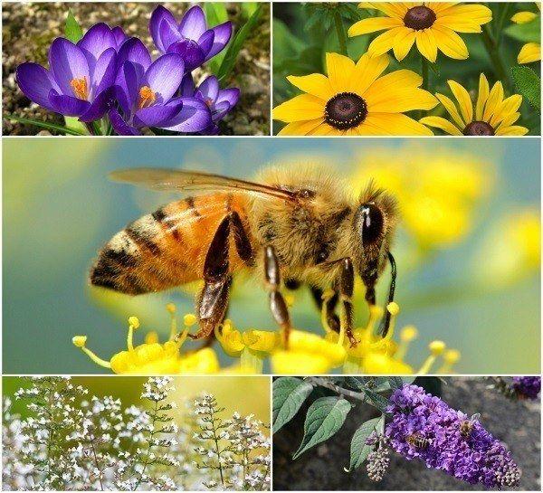 20 Schöne Blumen Bienen zu Ihrem Garten zu gewinnen