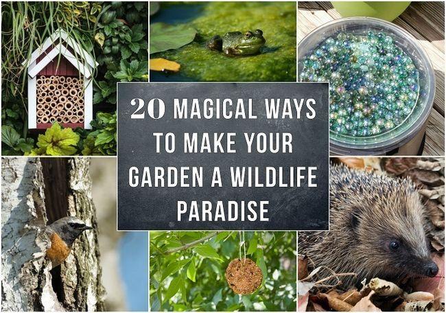 20 Magische Möglichkeiten, um Ihren Garten ein Tierparadies zu machen