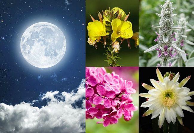 20 Pflanzen in Ihrem Mondlicht Garten wachsen