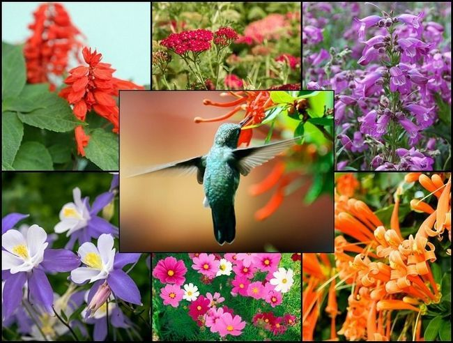 21 Glorious Gartenpflanzen, die Kolibris anlocken