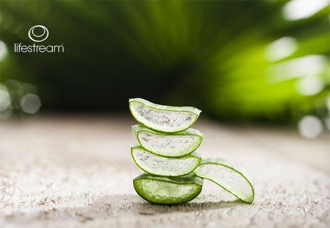 5 Gesundheitlichen Vorteile von Aloe Vera