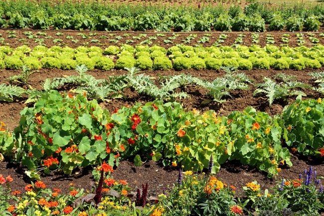 5 Instant-Tricks, um deutlich Ihren Garten Erträge steigern