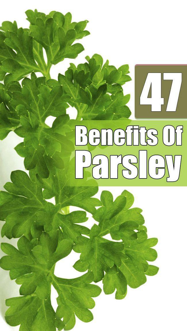 54 Erstaunliche Vorteile von Petersilie (ajmood) für Haut, Haare und Gesundheit