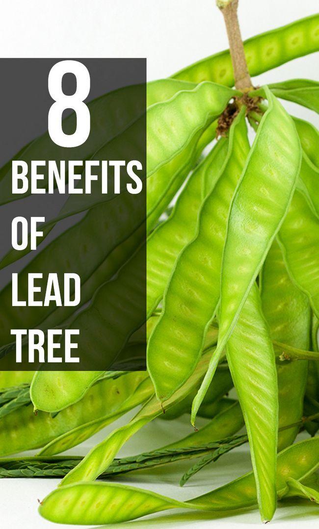 8 Erstaunliche Vorteile von Bleibaum für Ihre Haut, Haare und Gesundheit