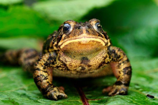 9 Wege Frösche & Kröten zu Ihrem Garten zu gewinnen