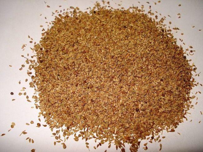 Erstaunlicher Nutzen für die Gesundheit verwendet und Nebenwirkungen von ajwain (carrom Samen), die Sie wissen sollten
