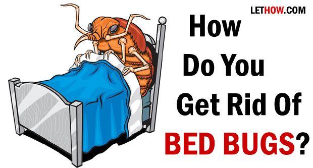 Wie wird man von Bettwanzen wieder los?