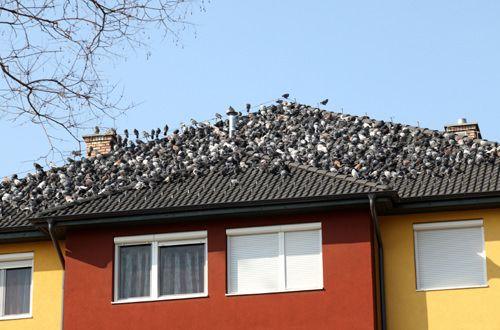 Wie wird man von Tauben los?