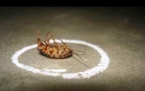 Wie wird man permanent von Kakerlaken befreit von Ihrem Zuhause