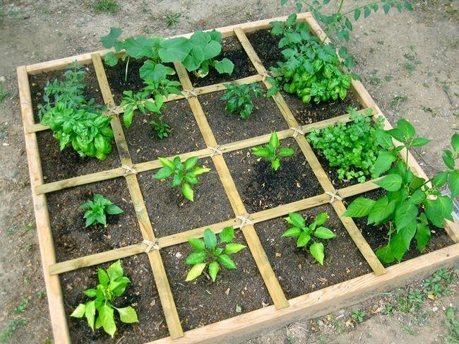 Wie ein Quadratfuß Gemüsegarten zu planen - die einfachste Möglichkeit, reichlich Gemüse zu wachsen