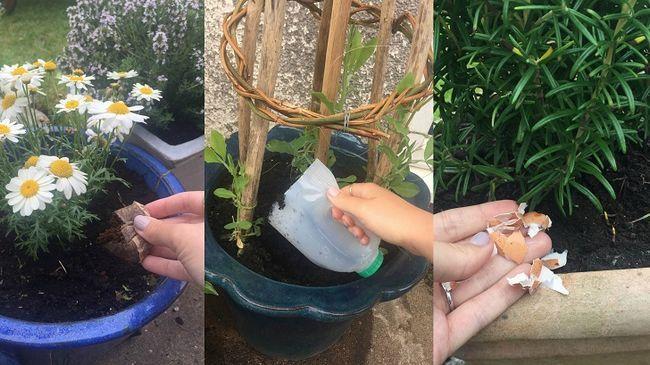 Sonderbare Wege 21 Haushaltsgegenstände in Ihrem Garten zu verwenden,